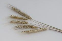 Photo of ear wheat Royalty Free Stock Photos