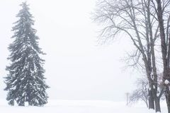 Photo eaten in the winter in the snow. Trees and plants in the park in winter. Fog and cold weather stock image