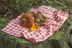 Photo of edible mushrooms on tree stump Stock Photos