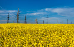 Photo of electric towers in rapeseed against blue sky Stock Images