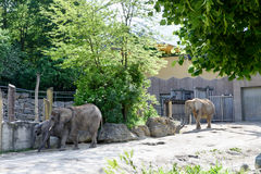 Photo of elephants at the zoo Stock Photography