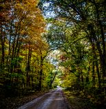 Photo of Empty Road With Green Leaf Trees on Both Side of the Road Stock Photo