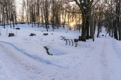 Photo of an Empty Walkway in Park in Alley on Sunny Winter Evening. Concept of Sadness and Loneliness stock photography