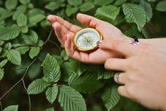 Photo en gros plan des mains femelles avec la boussole à côté d'un branc d'arbre image stock