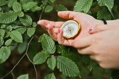 Photo en gros plan des mains femelles avec la boussole à côté d'un branc d'arbre photographie stock