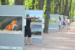 Photo exhibition in Summer Garden in Petersburg Royalty Free Stock Photography