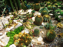 Photo of exotic cactus Royalty Free Stock Photos