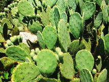 Photo of exotic cactus Stock Photo