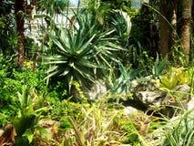 Photo of exotic plants Stock Photo