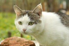 Photo extérieure d'été de chat masculin de Tom Images stock