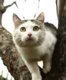 Photo extérieure d'été de chat masculin de Tom Photographie stock