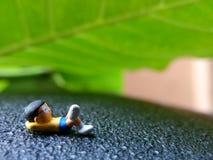 Photo, Eye Level View 07 July 2019, Sleeping Dreaming Nobi Nobita beyond Green Fresh Leaf, Garden, Jakarta, Indonesia, Studio Shot. Eye Level View 07 July 2019 stock photography