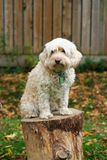 Photo of family pet. Taken in the backyard Stock Photo