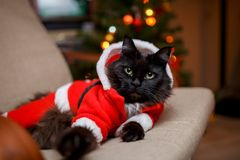 Photo of festive cat in Santa costume sitting in chair. Against background of Christmas tree with burning garland Royalty Free Stock Photos