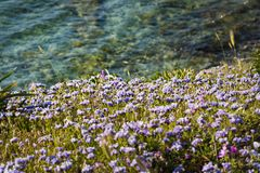 Photo of Field of Flowers Near Water royalty free stock photo