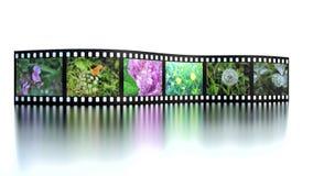 Photo film with reflection on white.  Stock Photos