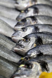 Photo of fish in ice Royalty Free Stock Image