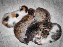 Photo five little kittens of different color lie on top of each other on a white wool mat.  royalty free stock photos