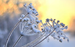 A photo of a flower. Winter Stock Images