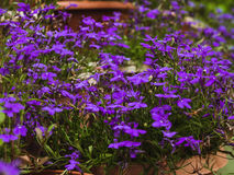 Photo of flowers growing in the city park royalty free stock photography