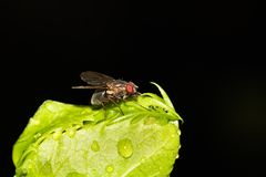 Fly. This is a photo of a fly, was taken in XiaMen botanical garden, China Stock Images