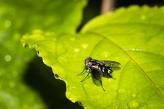 Fly. This is a photo of a fly, was taken in XiaMen botanical garden, China Stock Photography