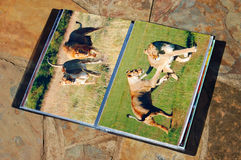 Photo folder of photographer. A display book of a portfolio of a photographer on stone background showing his work of wildlife photography in South Africa Stock Photo