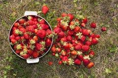 Photo fraîche de fraise Photographie stock