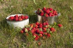 Photo fraîche de fraise Photos libres de droits