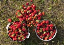 Photo fraîche de fraise Photo libre de droits
