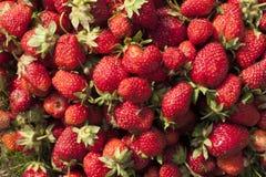 Photo fraîche de fraise Image libre de droits