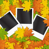 Photo frame with autumn leave Stock Images