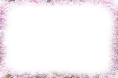 Photo frame background with Beautiful pink cherry blossom, Sakura flowers Stock Images