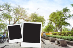 photo frame on big tree blackground blur Royalty Free Stock Photos