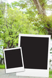 Photo frame on big tree blackground blur Royalty Free Stock Images