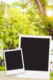 photo frame on big tree blackground blur Stock Images