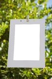 Photo frame on the cord Photograph, on the background of a lemon tree stock images