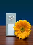 Photo frame and flower. Blank photo frame and yellow flower on dark-blue royalty free stock images