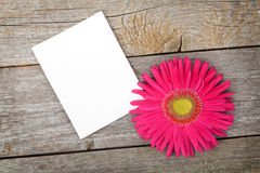 Photo frame and gerbera flower Stock Images