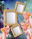 Photo frame with gladiolus. Old grunge background with photo frame with gladiolus Stock Photos