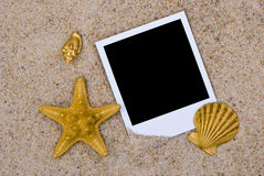 Photo frame with golden sea shells Stock Images