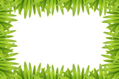 Photo frame green leaves. Stock Photography