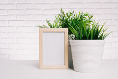 Photo frame and house plant. Blank small wooden photo frame and house plant royalty free stock photography