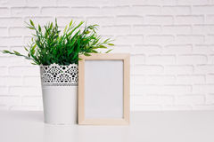 Photo frame and house plant Royalty Free Stock Images
