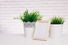Photo frame and house plant Stock Images