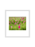 Photo frame isolated with clipping path for decorate, interior,. Souvenir, gift, design Royalty Free Stock Images
