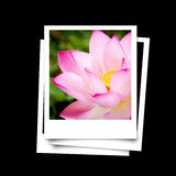 Photo frame of lotus flower isolated on black background. Detail Stock Photography