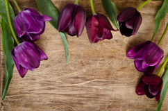 Photo frame made of fresh tulips Royalty Free Stock Photo
