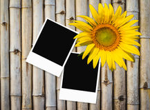 Photo frame on old  bamboo fence background Stock Photography