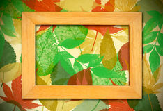 Photo frame over leaves background Royalty Free Stock Photography